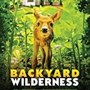 Backyard Wilderness with a cute animated deer looking apprehensive